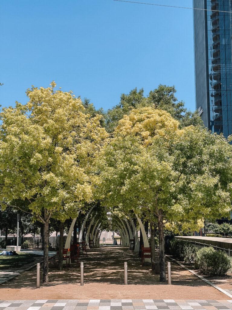 trees-5909052